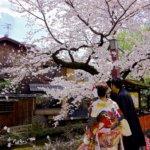 Gion_Sakura_2