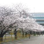 HanshinKoshien