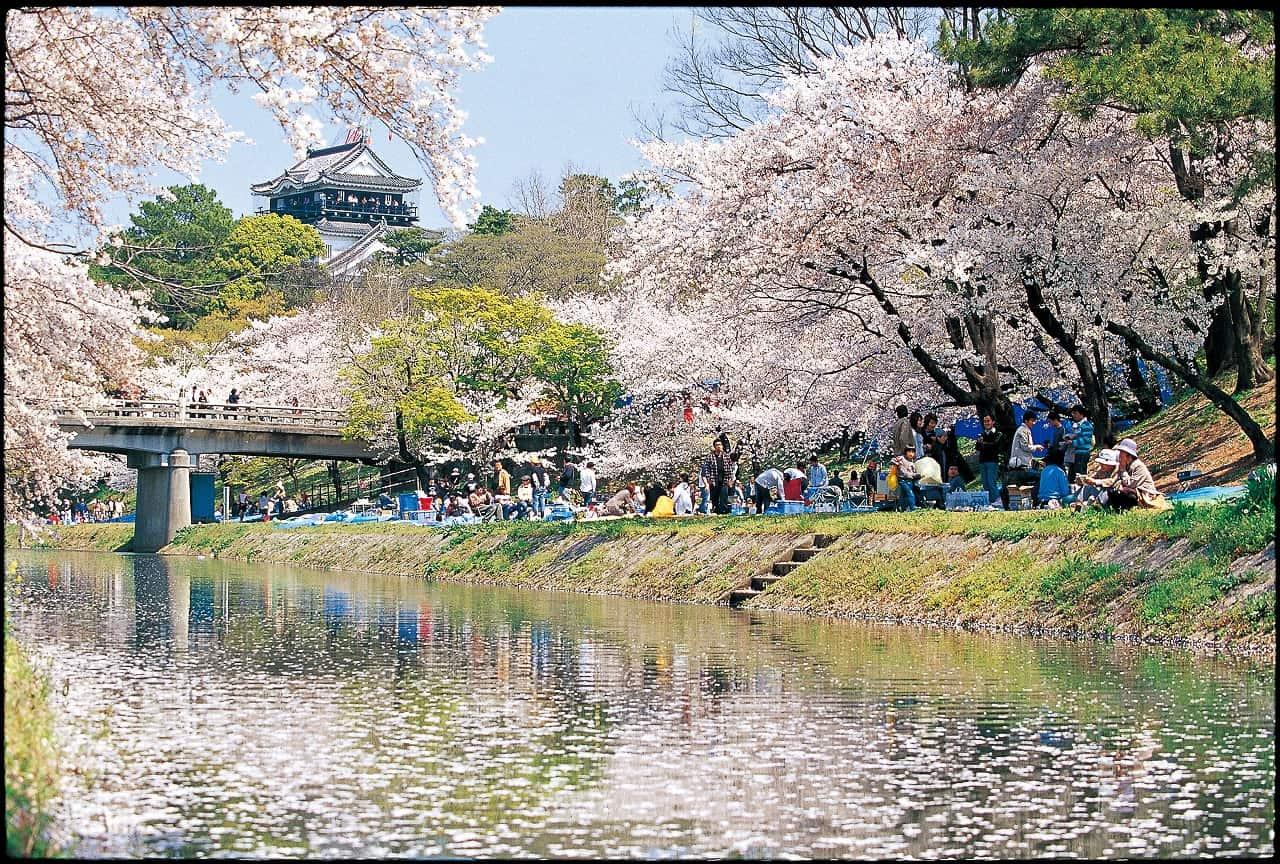 ในฤดูใบไม้ผลิ มีผู้คนมาปิคนิคชมซากุระกันที่สวนโอกาซากิ (Okazaki Park)