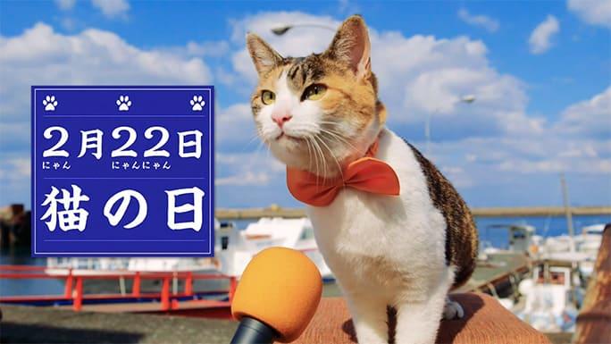 ๋Japan cat day วันแมวญี่ปุ่น