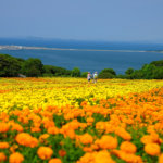 httpshowcase.city.fukuoka.lg.jp 1