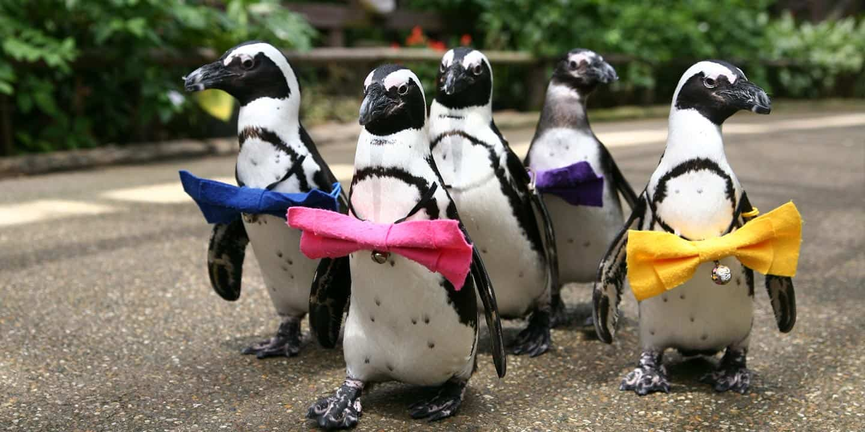 เพนกวิ้นสุดน่ารักที่สวนมัตสึเอะ (Matsue Vogel Park)