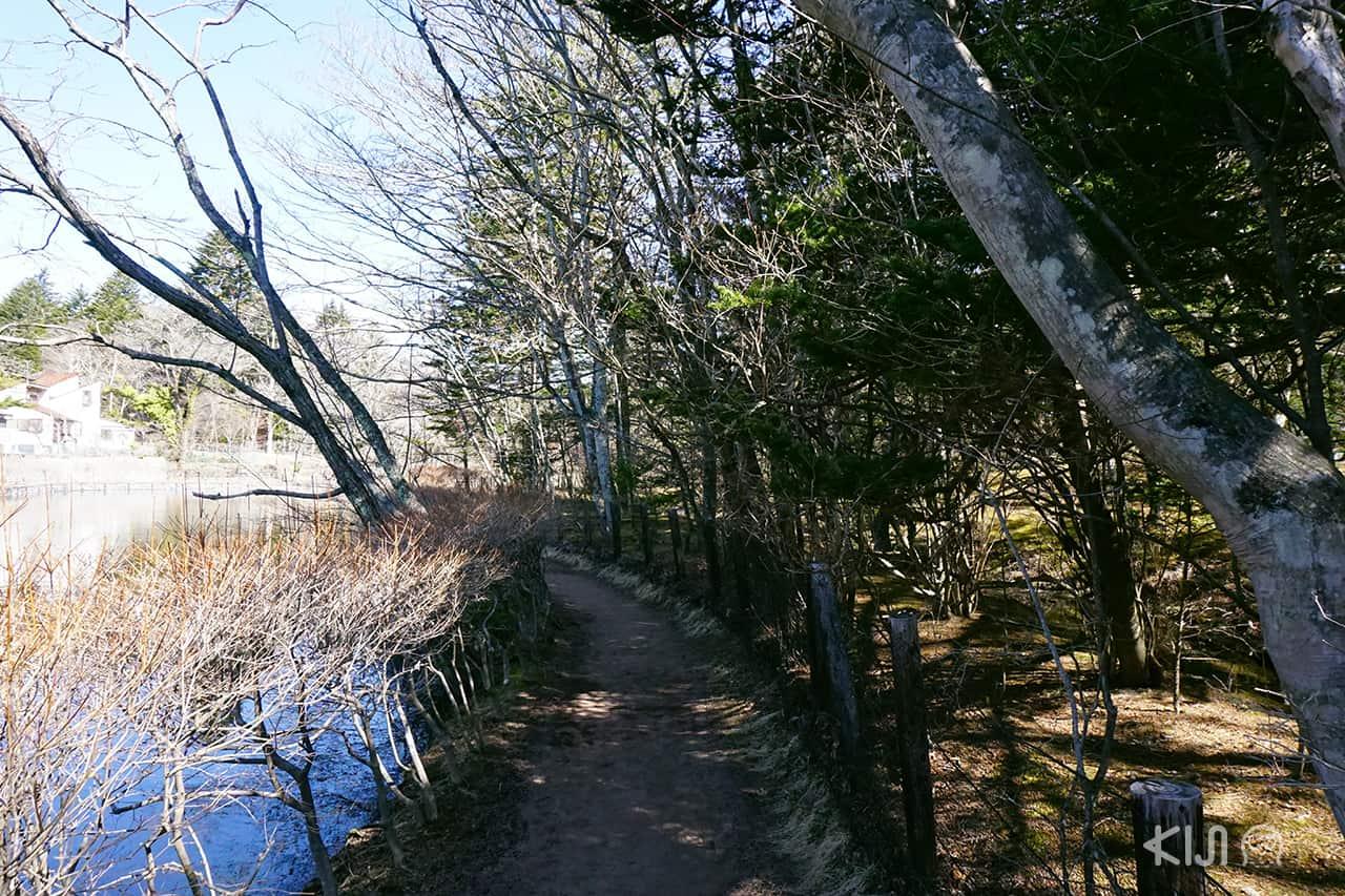 ทางเดินรอบๆ Kumoba Pond