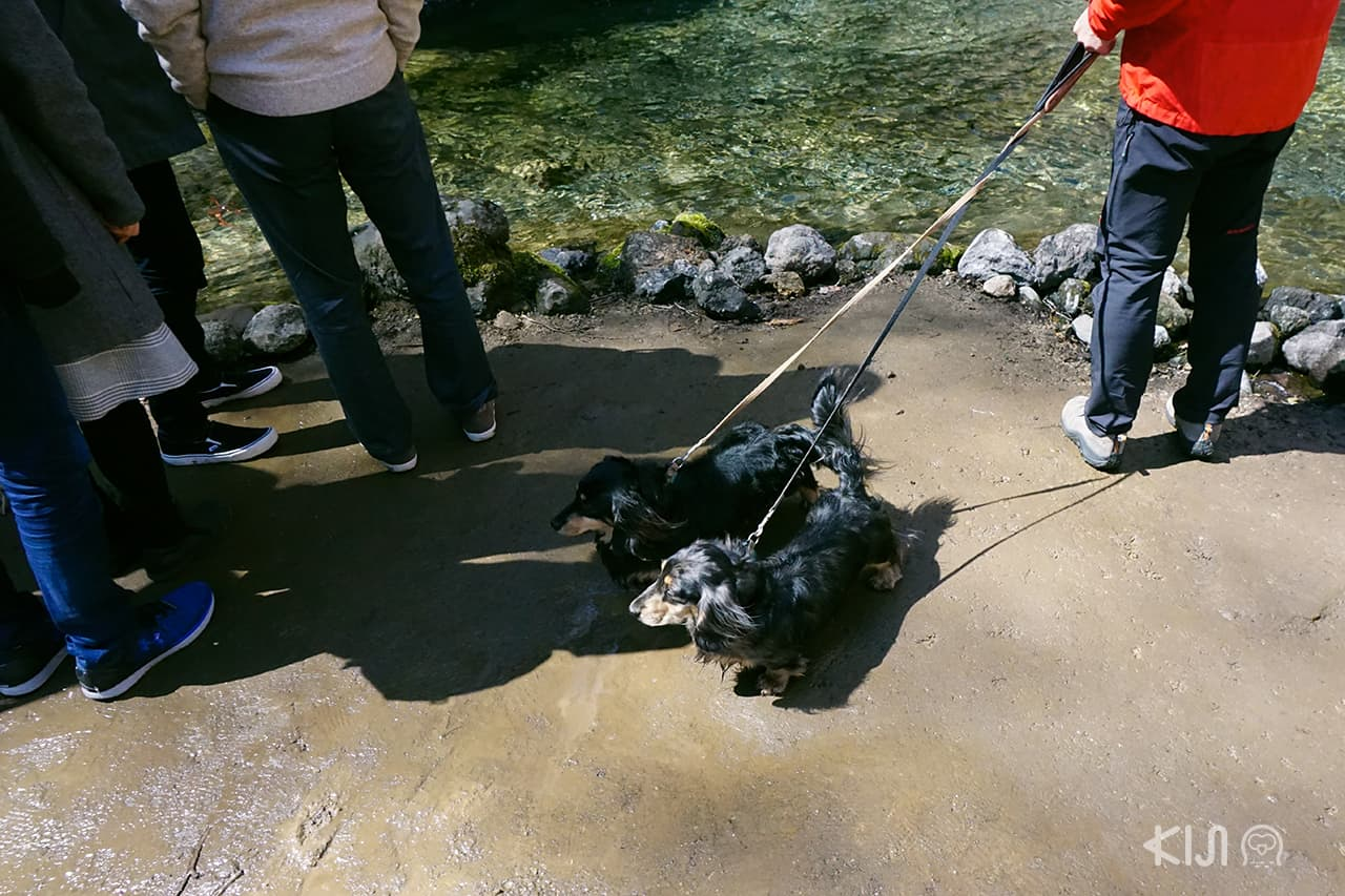 พาน้องหมามาเดินเล่นที่น้ำตก Shiraito