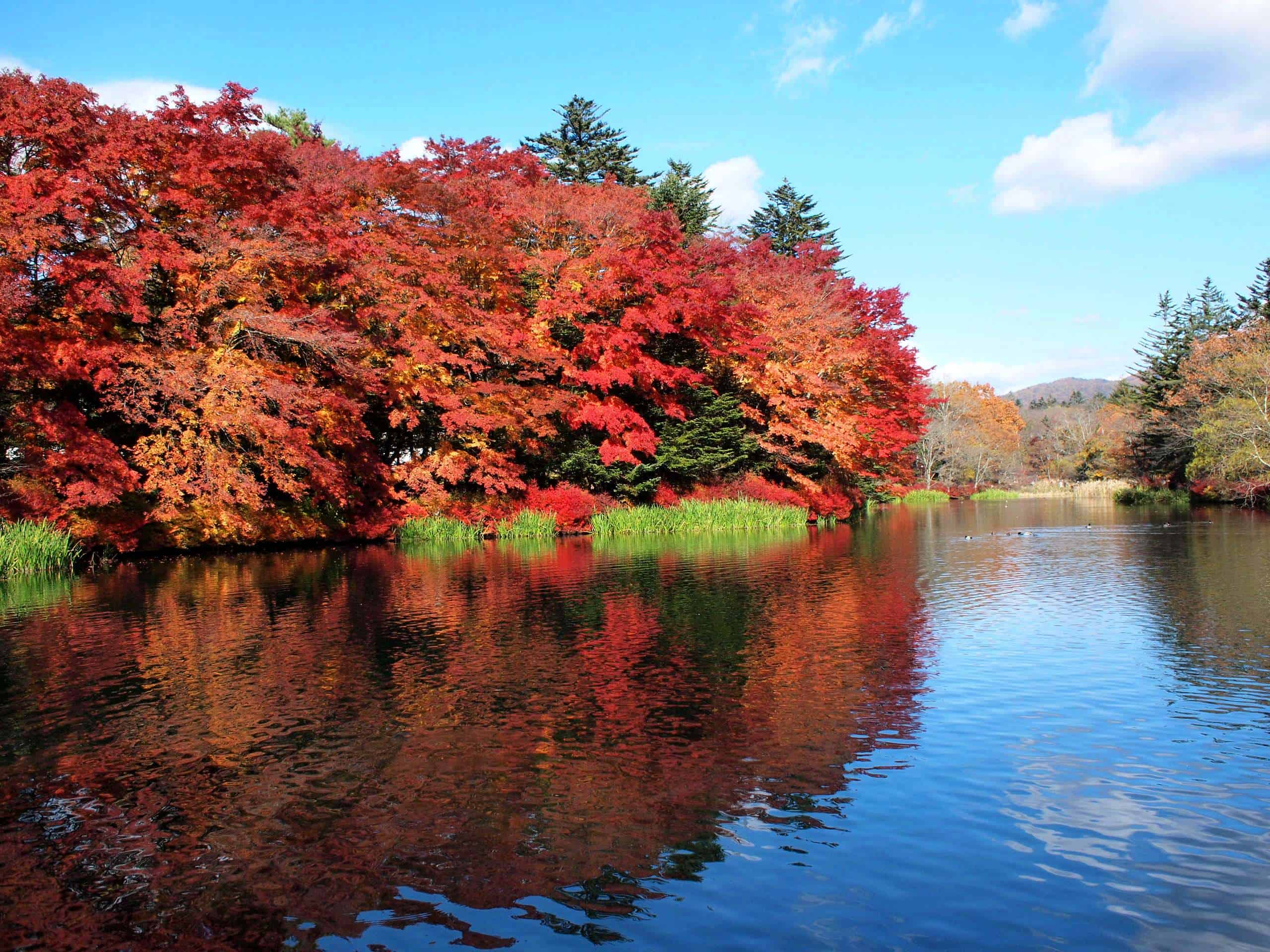 Kumoba Pond ช่วงฤดูใบไม้ผลิ คารุอิซาวะ (Karuizawa) จ.นากาโน่ (Nagano)