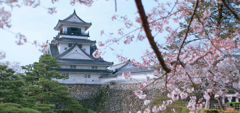 ปราสาทโคจิ (Kochi Castle) ในช่วงฤดูใบไม้ผลิ