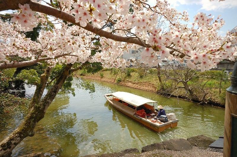 นั่งเรือชมความงามของดอกซากุระ ในช่วงฤดูใบไม้ผลิ จังหวัดชิมาเนะ