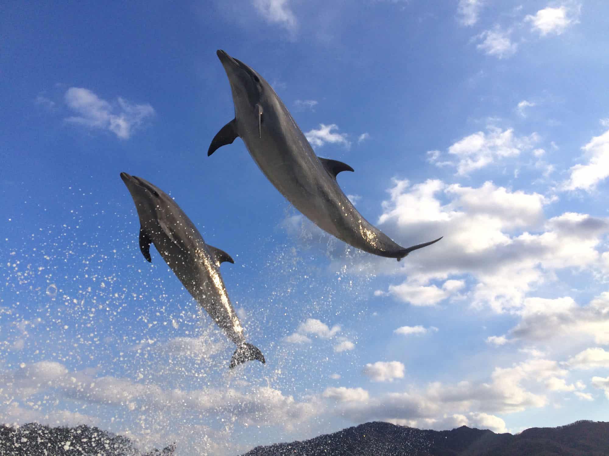 โลมาในศูนย์ฝึกปลาโลมา (Japan Dolphin Center) จังหวัดคางาวะ (kagawa)