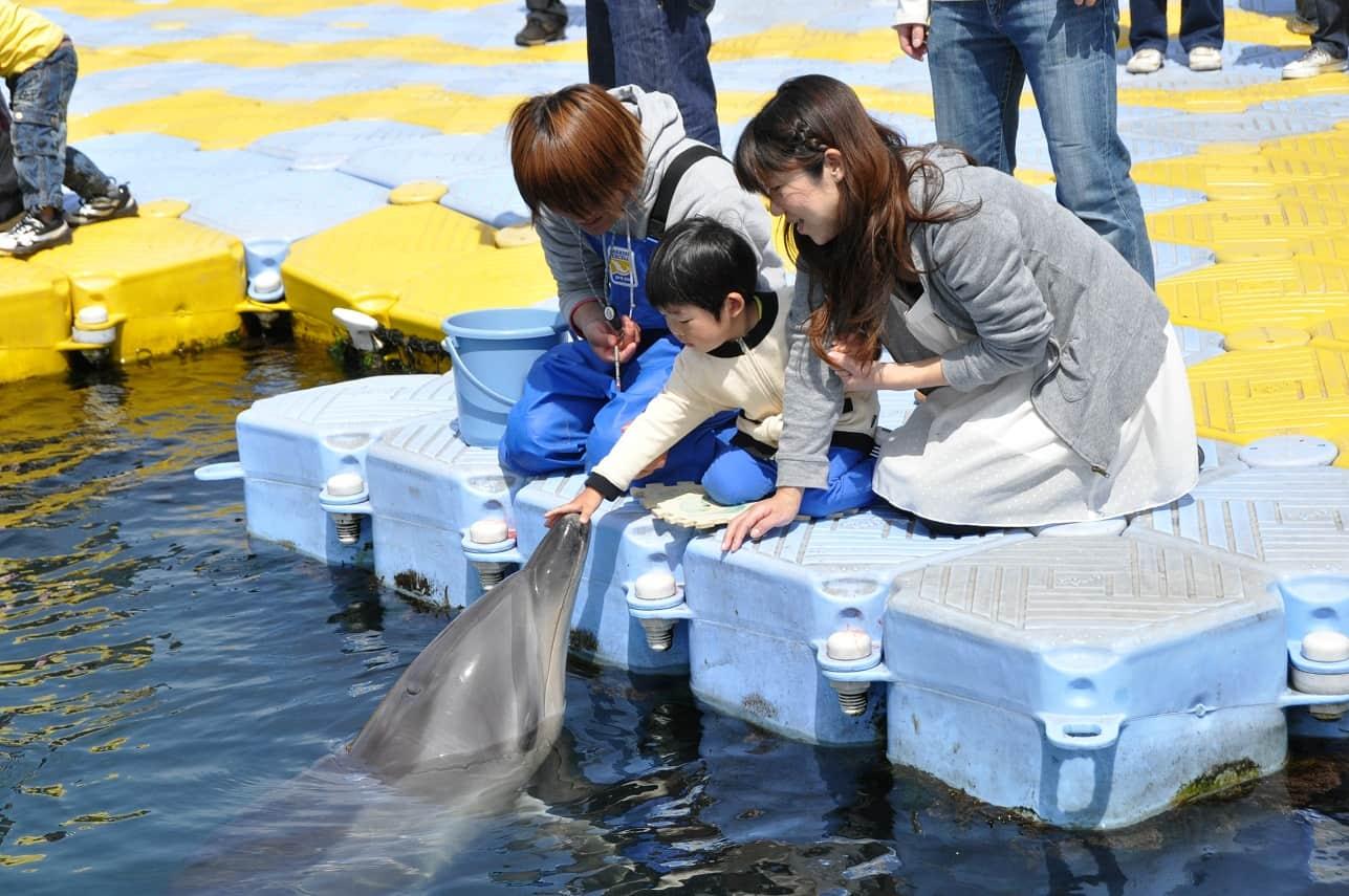 เด็กน้อยเล่นกับปลาโลมาที่ Japan Dolphin Center