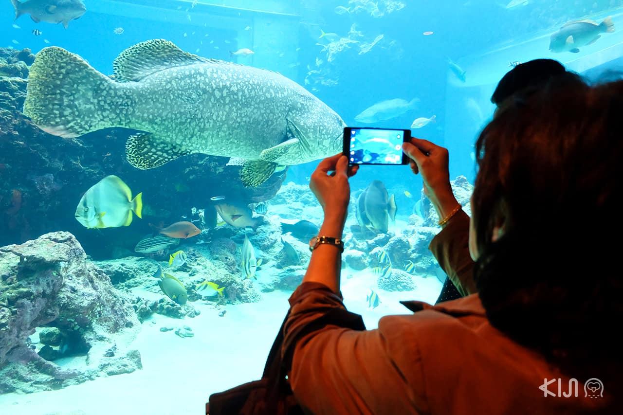 ปลาน้อยใหญ่ว่ายวนไปมาในน้ำที่ อควาเรียม ของญี่ปุ่น