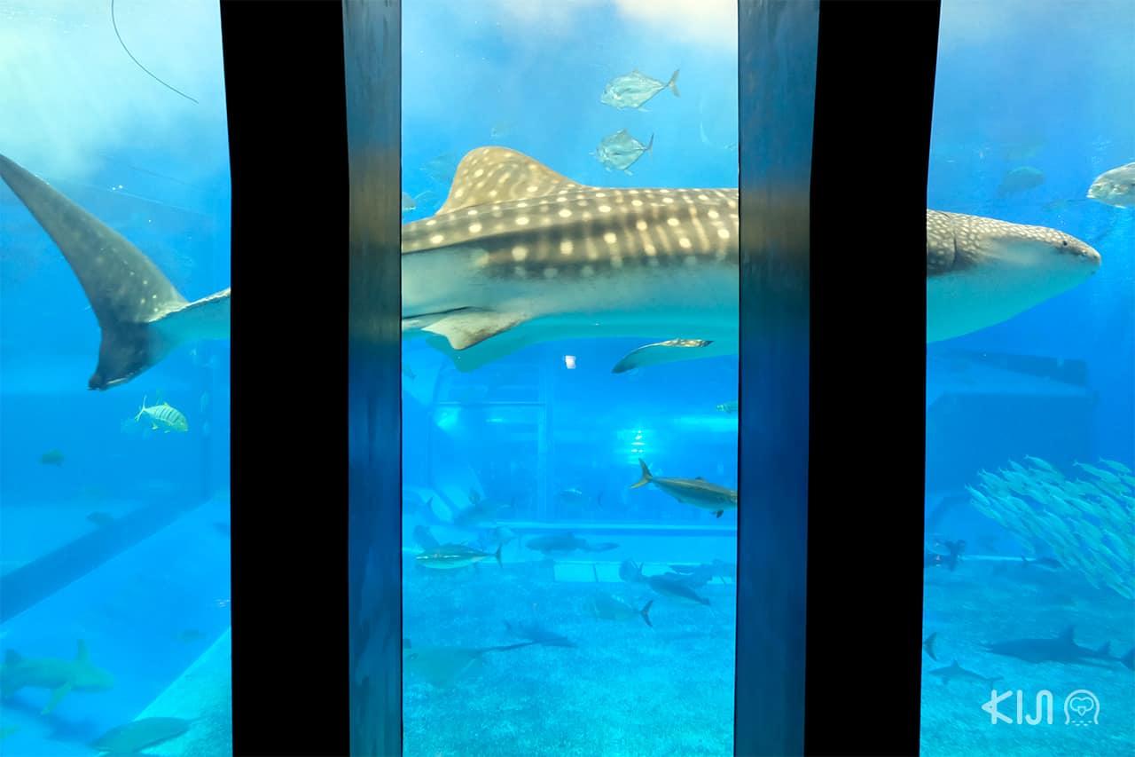อควาเรียม ทำให้เราสามารถใกล้ชิดสัตว์น้ำใต้ท้องทะเลมากขึ้น