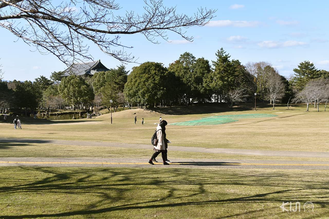 คนนาราทุกเพศทุกวัย ชอบมาเดินเล่นกันที่สวนสาธารณะนารา (Nara Park)