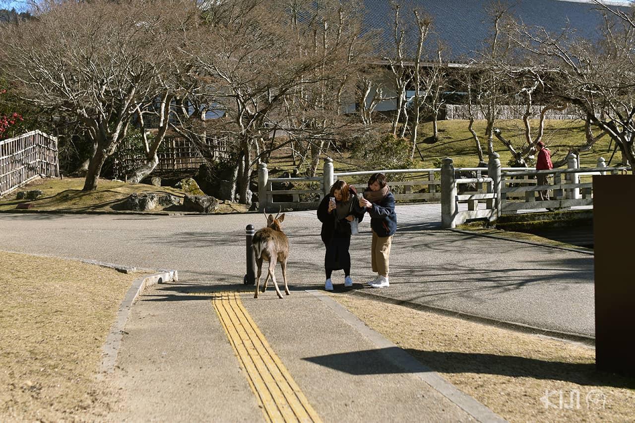 สาวๆ ถ่ายรูปเจ้ากวางที่สวนสาธารณะนารา (Nara Park)