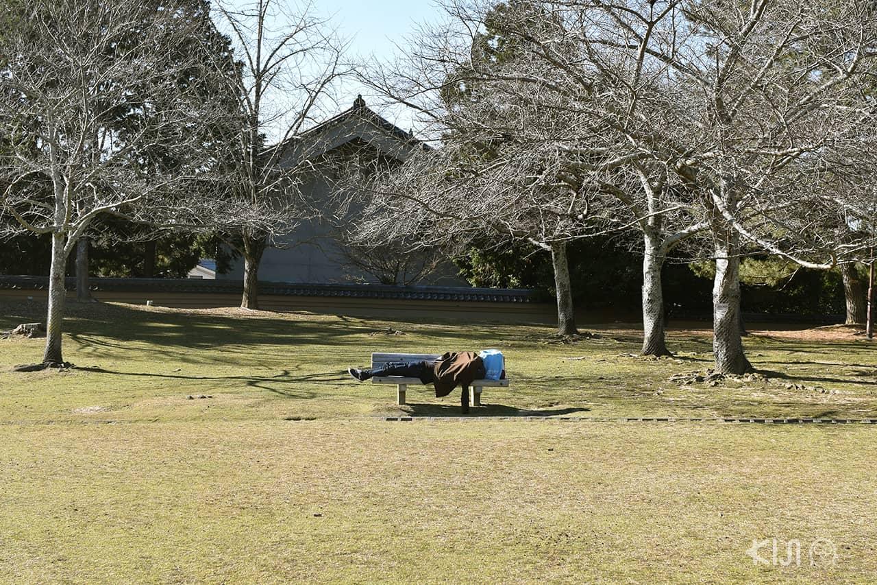 คนนอนหลับที่สวนสาธารณะนารา