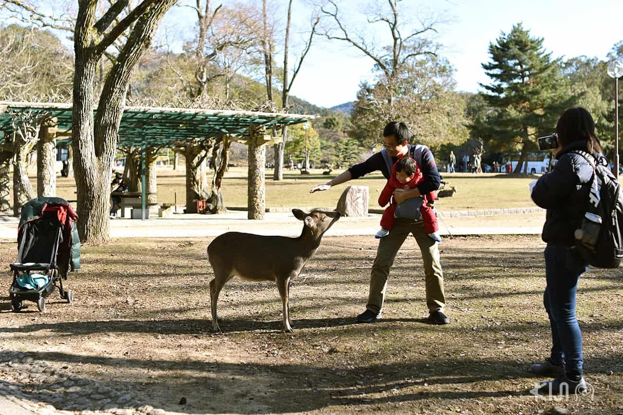 บรรยากาศโดยรอบของสวนสาธารณะนารา (Nara park)