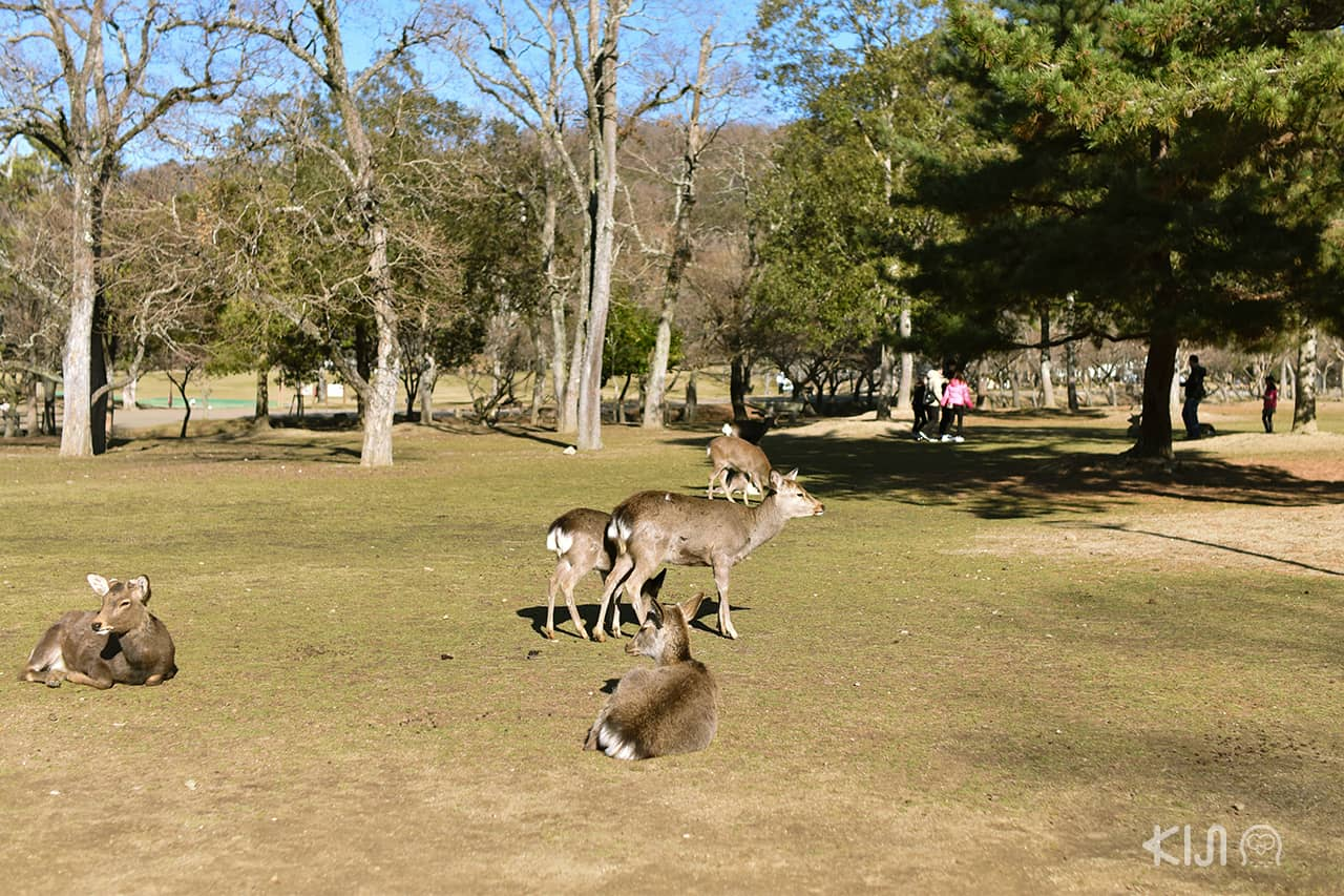 สวนกวางนารา (Nara park)