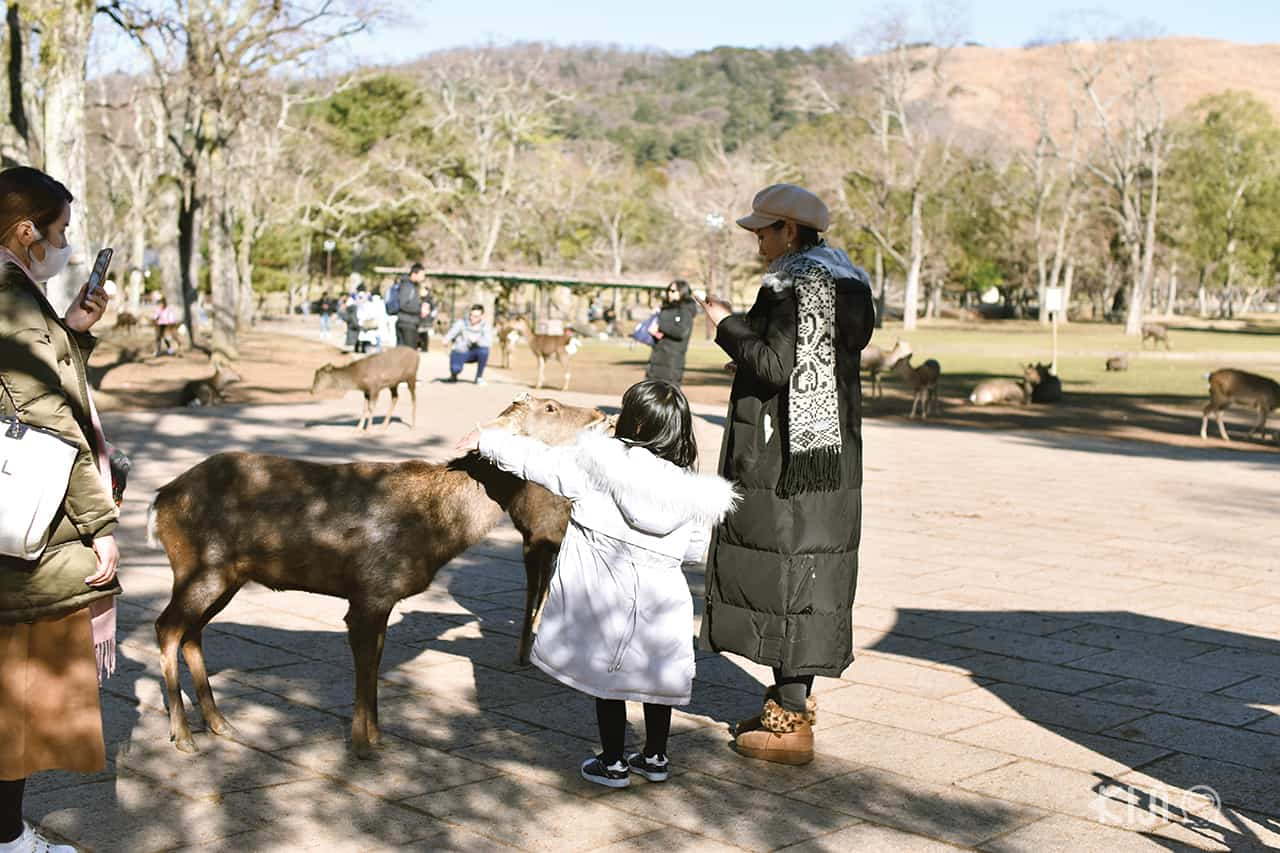 เด็กน้อยลูบหัวกวางด้วยความน่ารัก ที่สวนสาธารณะนารา