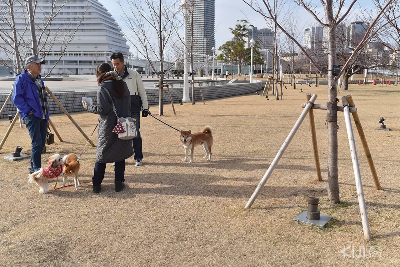 ผูุ้คนพาสัตว์เลี้ยงมาเดินเล่นที่ Kobe Harborland