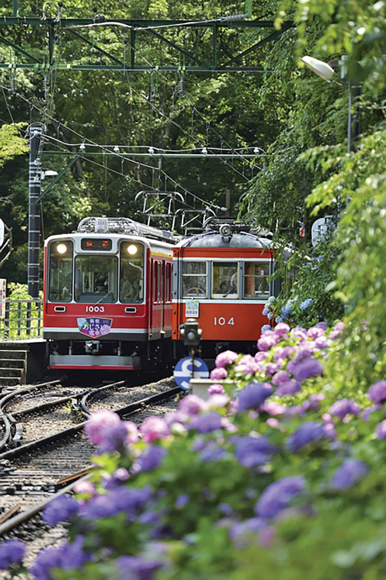 ซื้อบัตรโดยสาร Hakone Kamakura Pass นั่งรถไฟชมดอกไฮเดรนเยีย