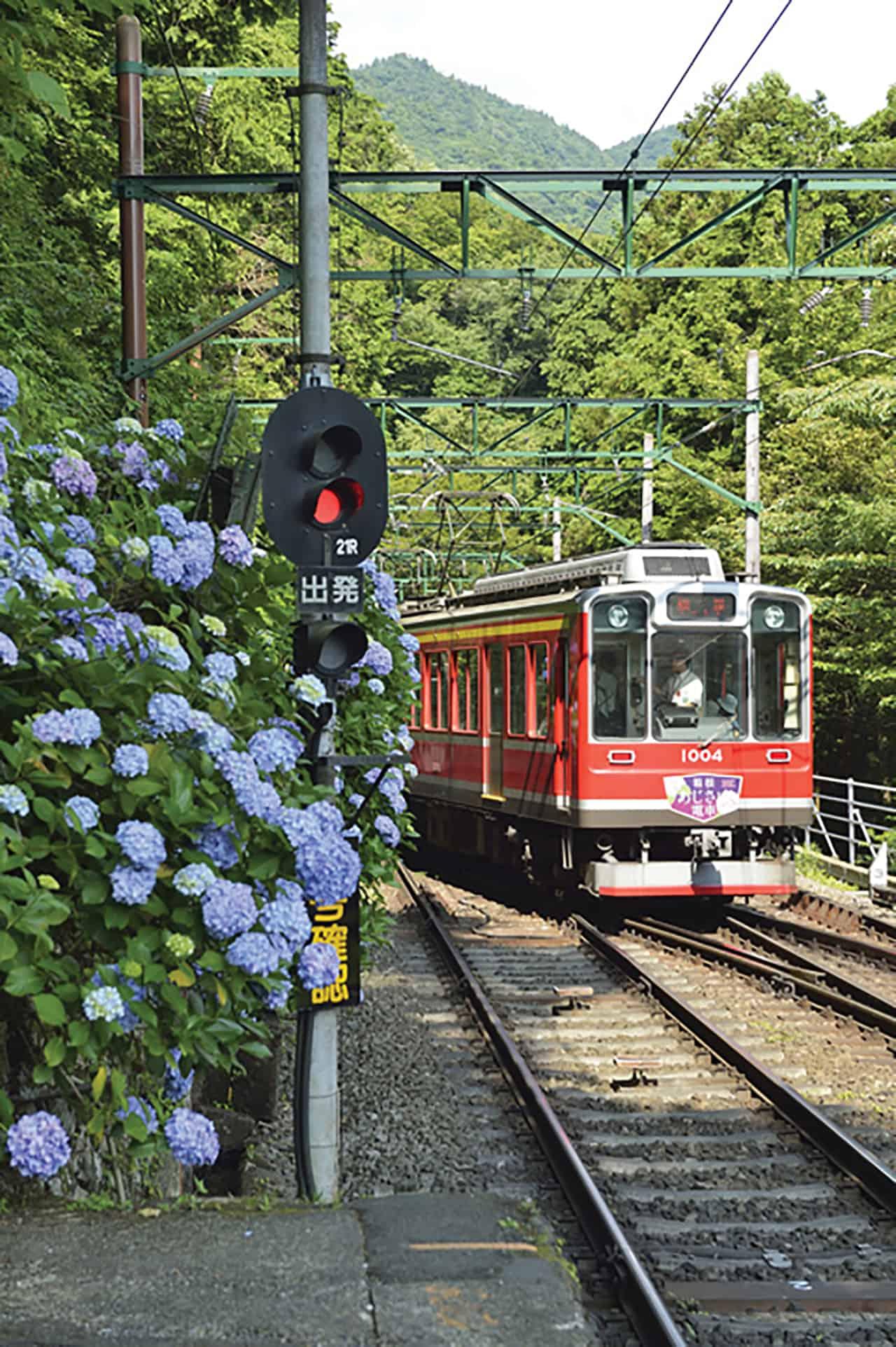 Hakone Kamakura Pass: เมืองฮาโกเน่มีเส้นทางรถไฟสายดอกไฮเดรนเยีย (Hydrangea Train หรือ Ajisai Train)