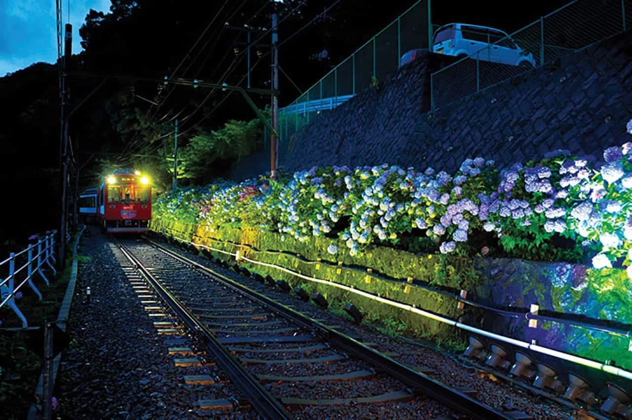 Hakone Kamakura Pass: ตอนกลางคืนมีอีเว้นท์ Hydrangea Train Light Up