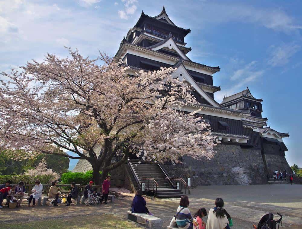 ปราสาทคุมาโมโตะ อีกหนึ่งจุดชมซากุระที่ดีที่สุดของเมืองคุมาโมโตะ (Kumamoto)