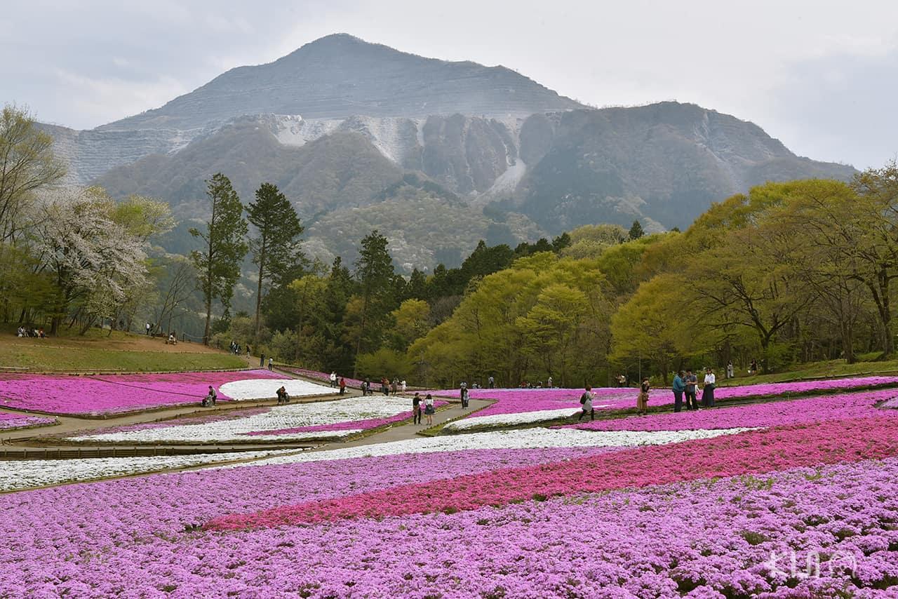 บรรยากาศภายในสวน Hitsujiyama Park