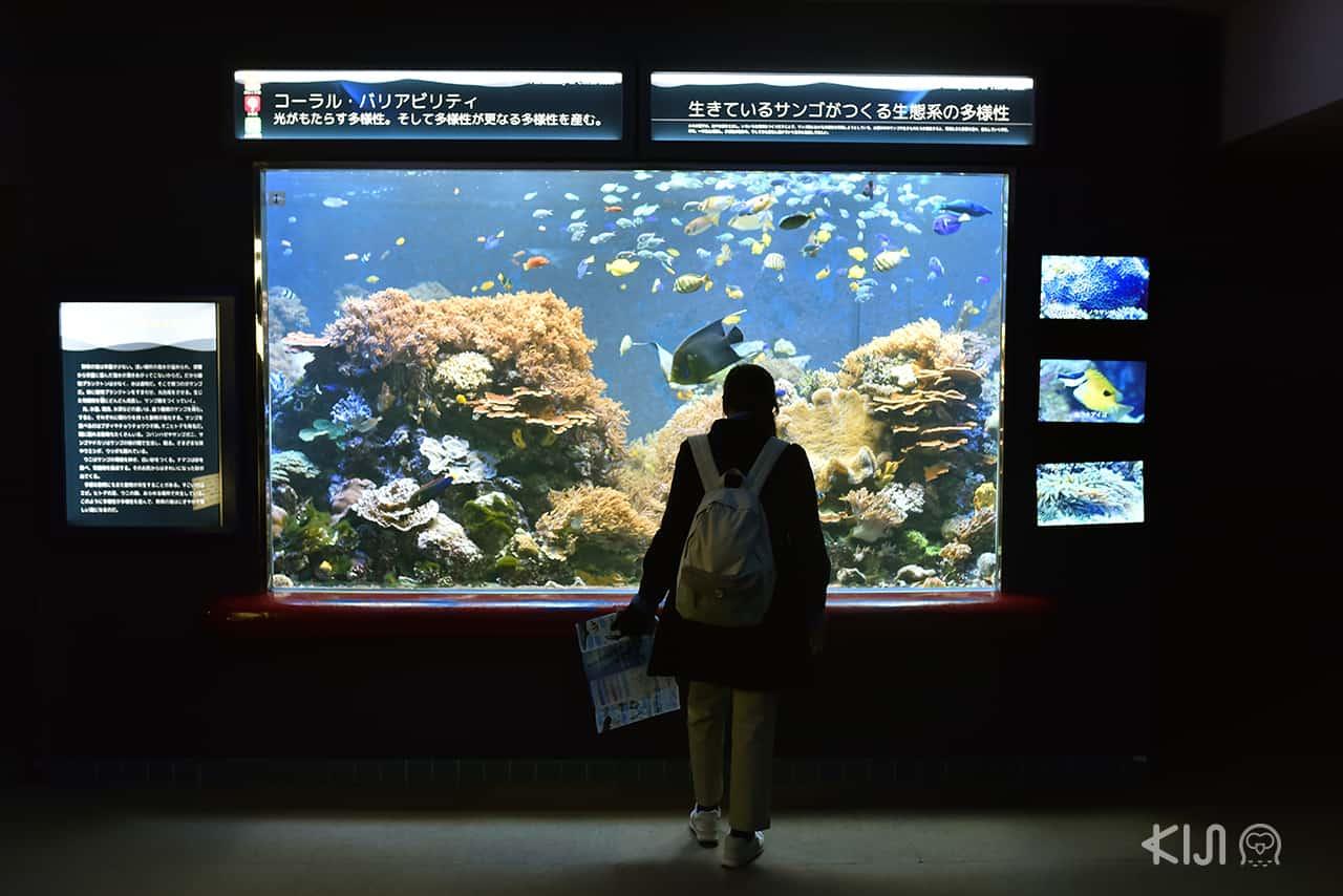 Suma Aqualife Park - West Kobe
