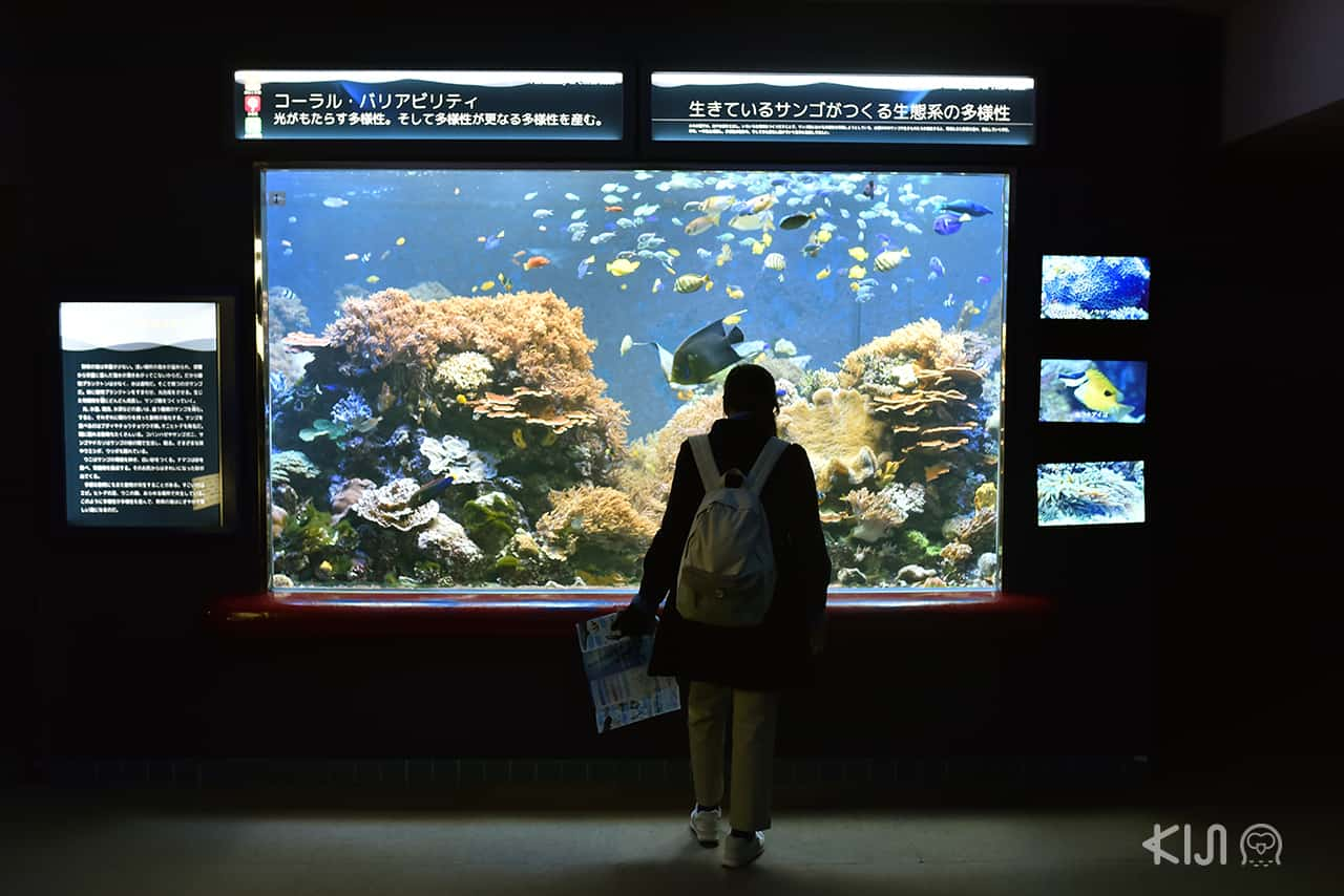 Suma Aqualife Park - โกเบ ตะวันตก