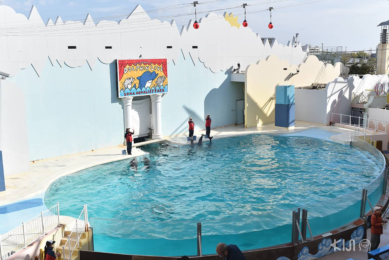 Dolphin Live at Suma Aqualife Park ,โกเบ