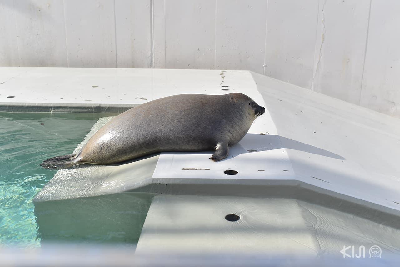 แมวน้ำที่พิพิธภัณฑ์สัตว์น้ำ Suma Aqualife Park