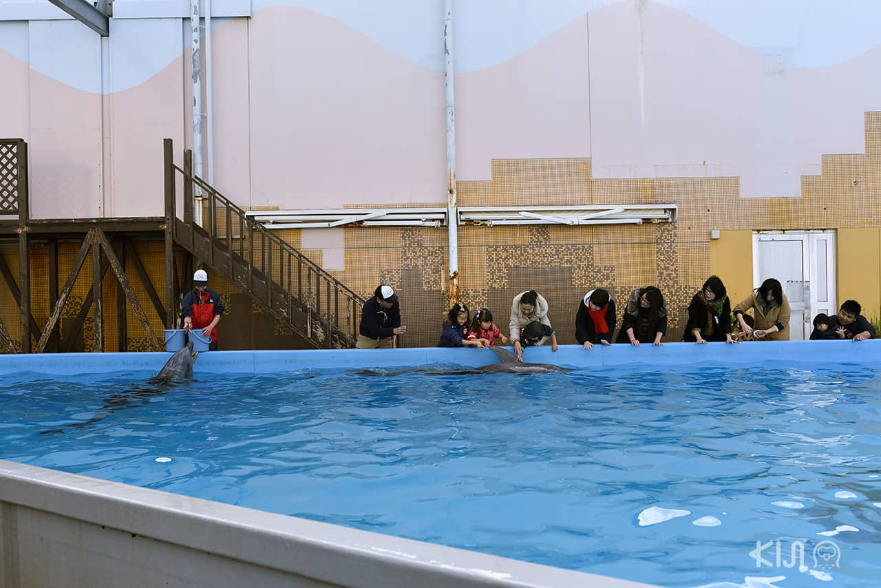 Dolphin Live Pavillion , Suma Aqualife Park , West Kobe