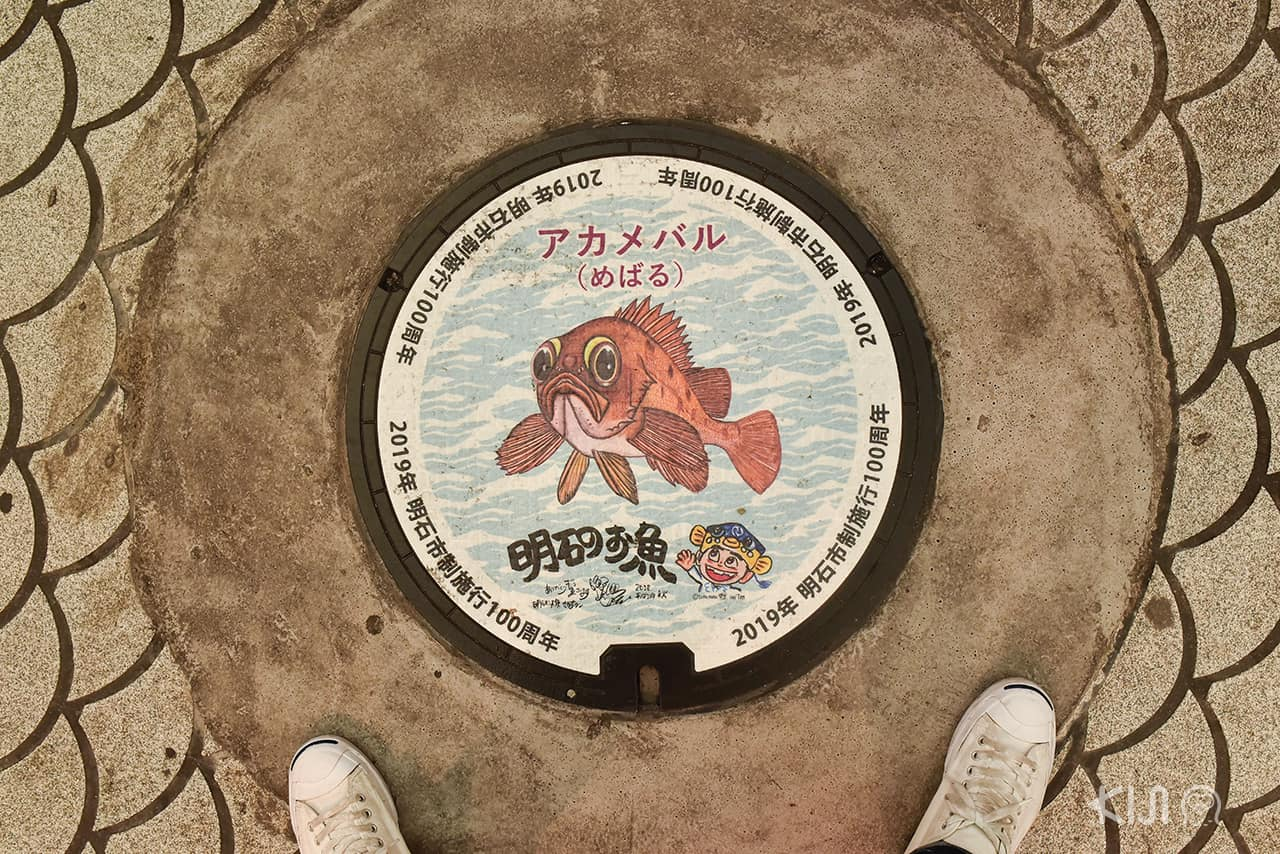 ฝาท่อลายปลาที่ Suma Aqualife Park ใน โกเบ อากาชิ ฮิเมจิ