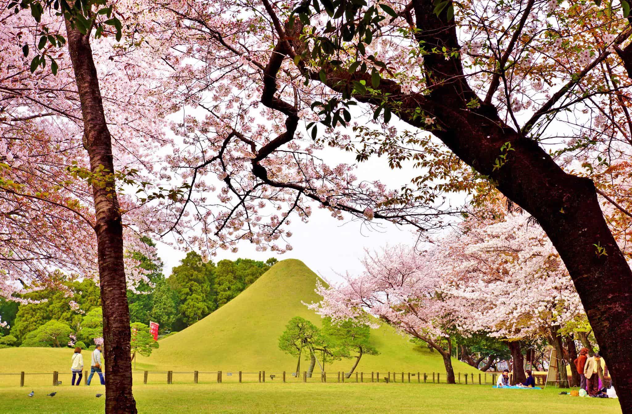 สวน Suizenji Koen ช่วงฤดูใบไม้ผลิ มีซากุระบานสะพรั่ง