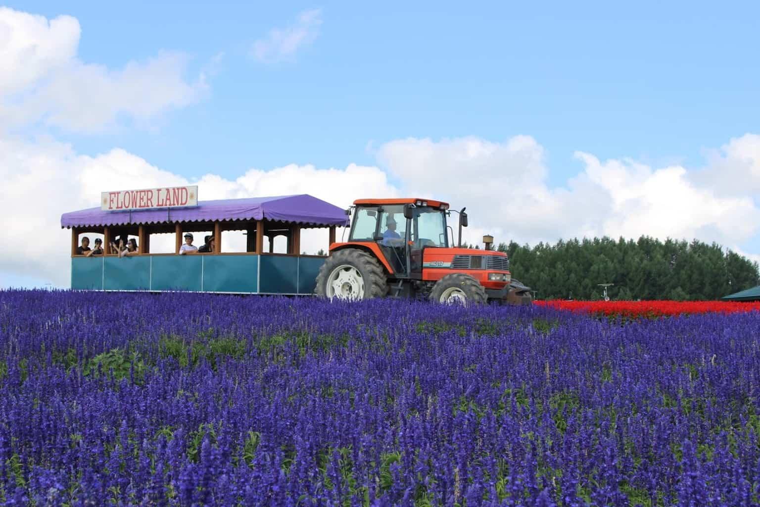 กิจกรรมนั่งรถชม ทุ่งลาเวนเดอร์ และดอกไม้นานาพันธุ์ ที่ Flower Land Kamifurano ฮอกไกโด