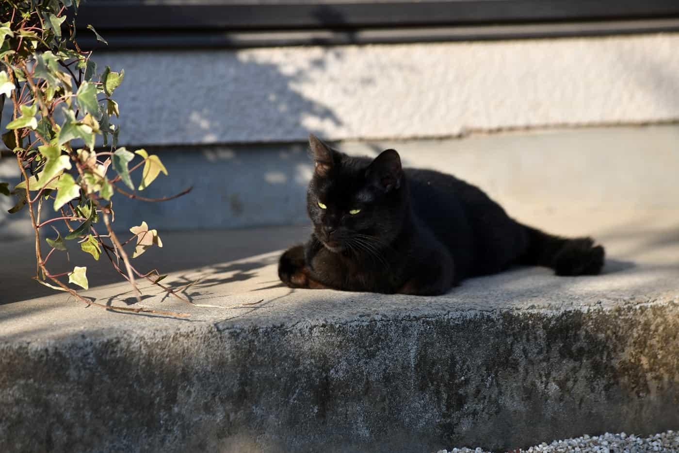 เจ้าแมวดำ จิบิ จาก Only The Cat knows เจ้าเหมียวจิบิ หายไปไหนนะ?
