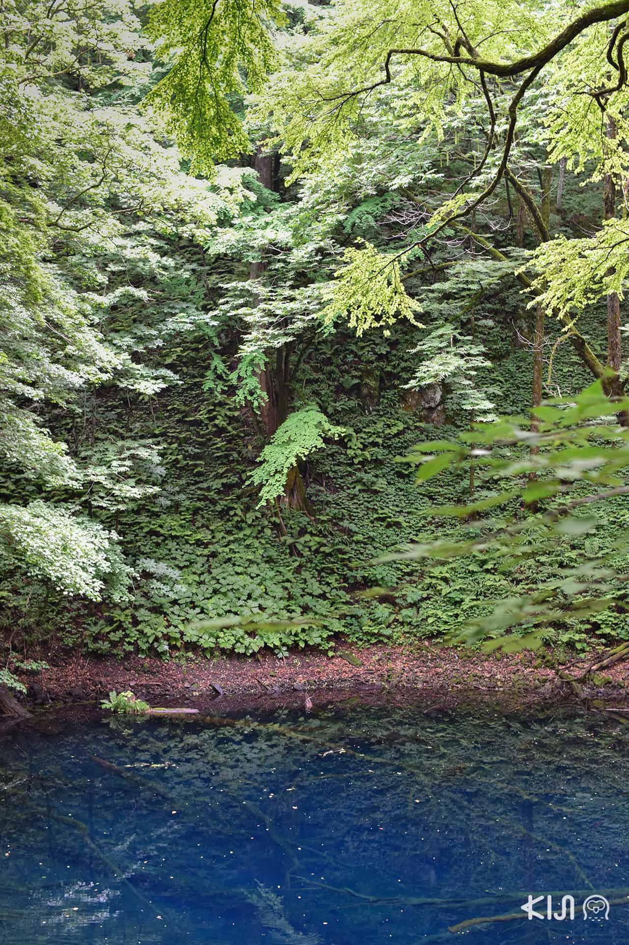 สระมรกตอาโออิเคะ (Aoike) - JR Eats Pass Tohoku area