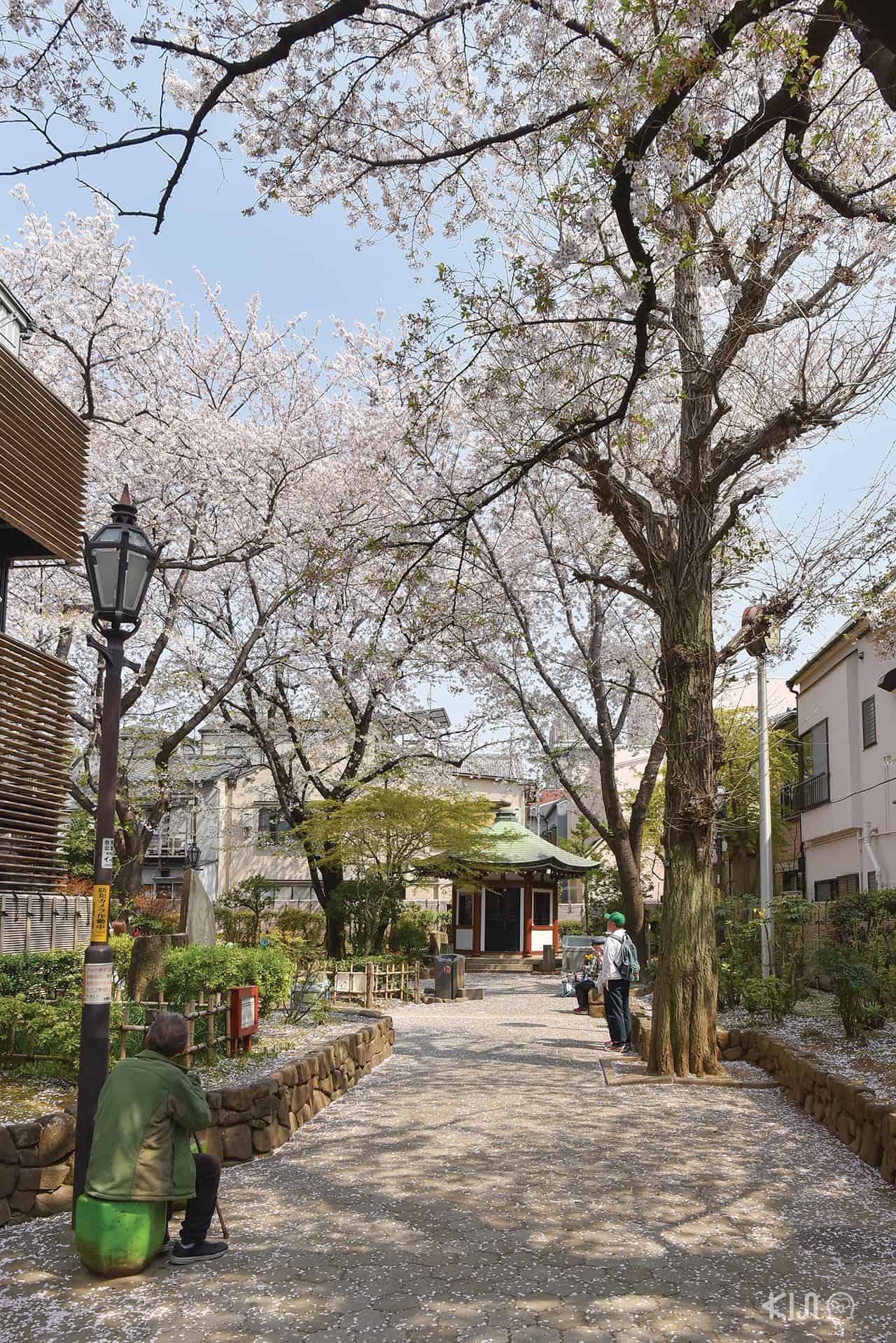 สวนอนุสรณ์โอกาคุระ เท็นชิน | Okakura Tenshin Memorial Park