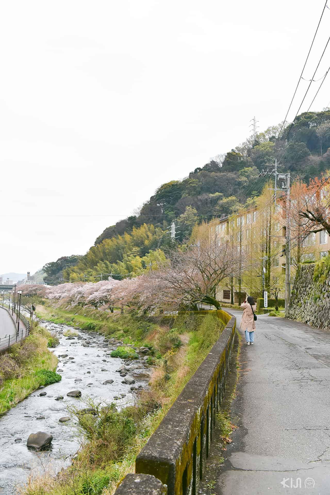 ริมแม่น้ำชิโตเสะในเมือง Yugawara