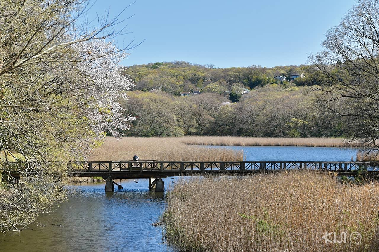 เมืองอิโต (Ito) จ.ชิซูโอกะ (SHIZUOKA) - ทะเลสาบอิปเปกิ (Lake Ippeki)