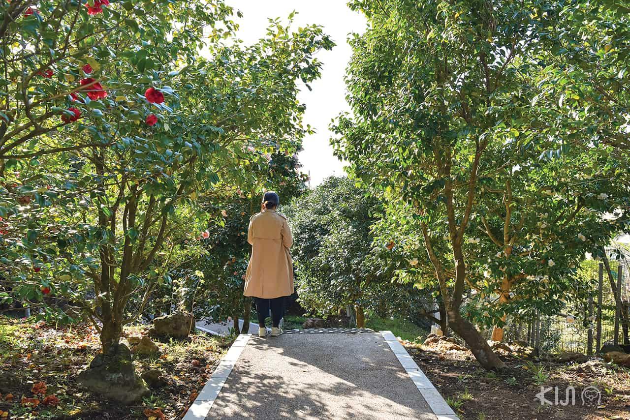 เมืองอิโต (Ito) จ.ชิซูโอกะ (SHIZUOKA) - สวนสาธารณะโคมูโระ (Komuroyama Park)