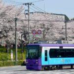 Tokyo Sakura Tram1_Tokyo_Japan