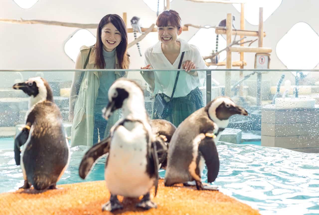 ตามติดชีวิตเพนกวินใน Nifrel Aquazoo