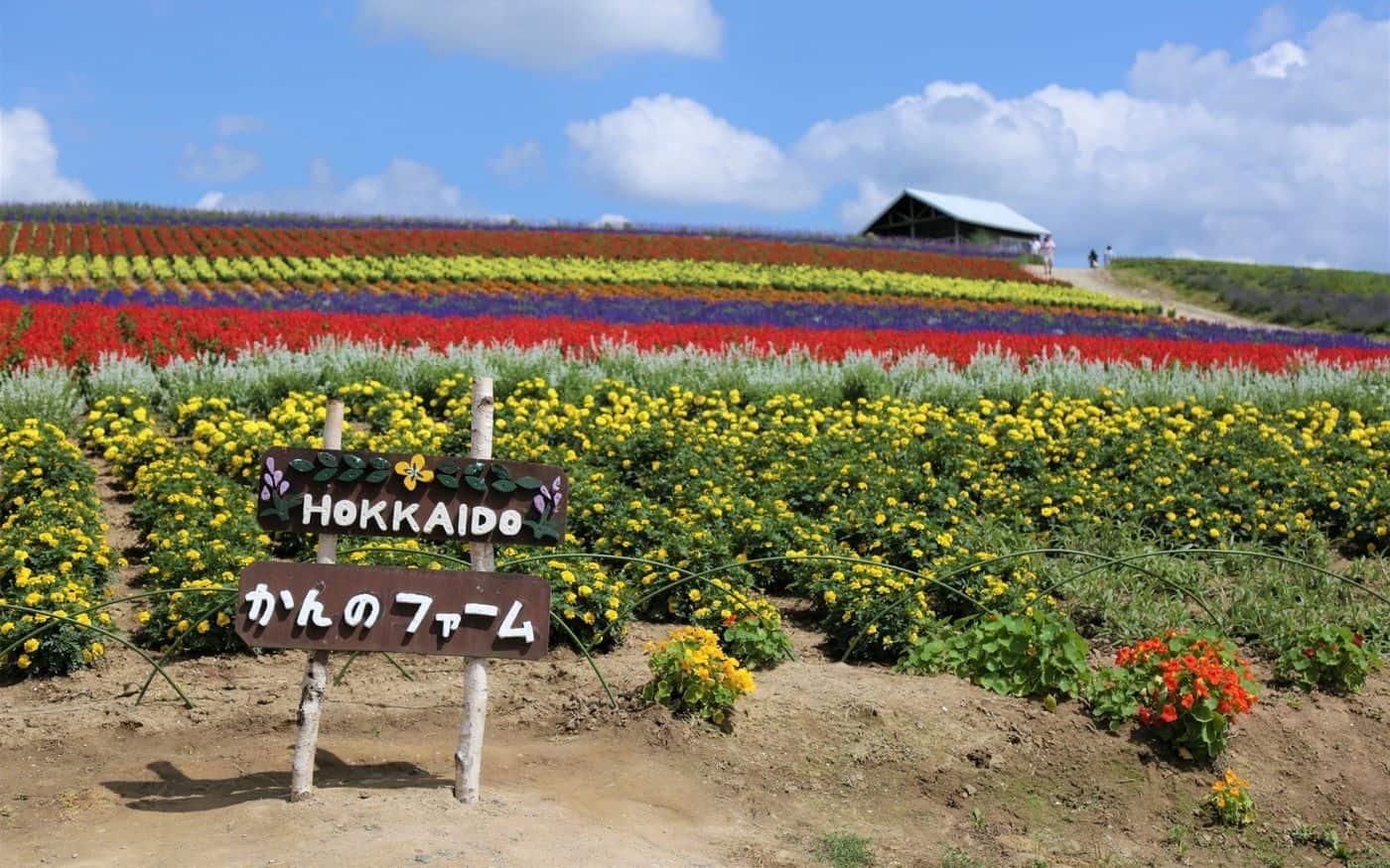 ทุ่งลาเวนเดอร์ Kanno Farm ใน ฮอกไกโด