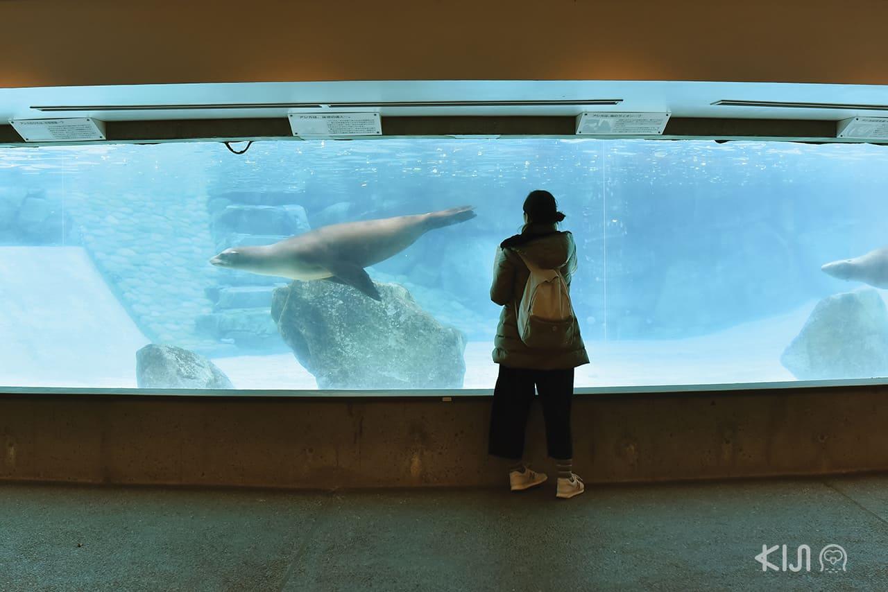 โซนสัตว์น้ำของสวนสัตว์โกเบโอจิ (Kobe Oji Zoo)