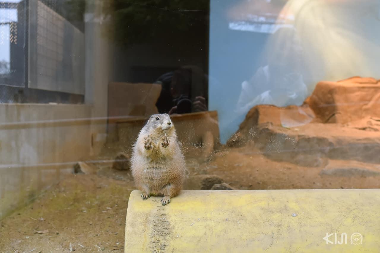 สัตว์ตัวจิ๋วใน Kobe Oji Zoo