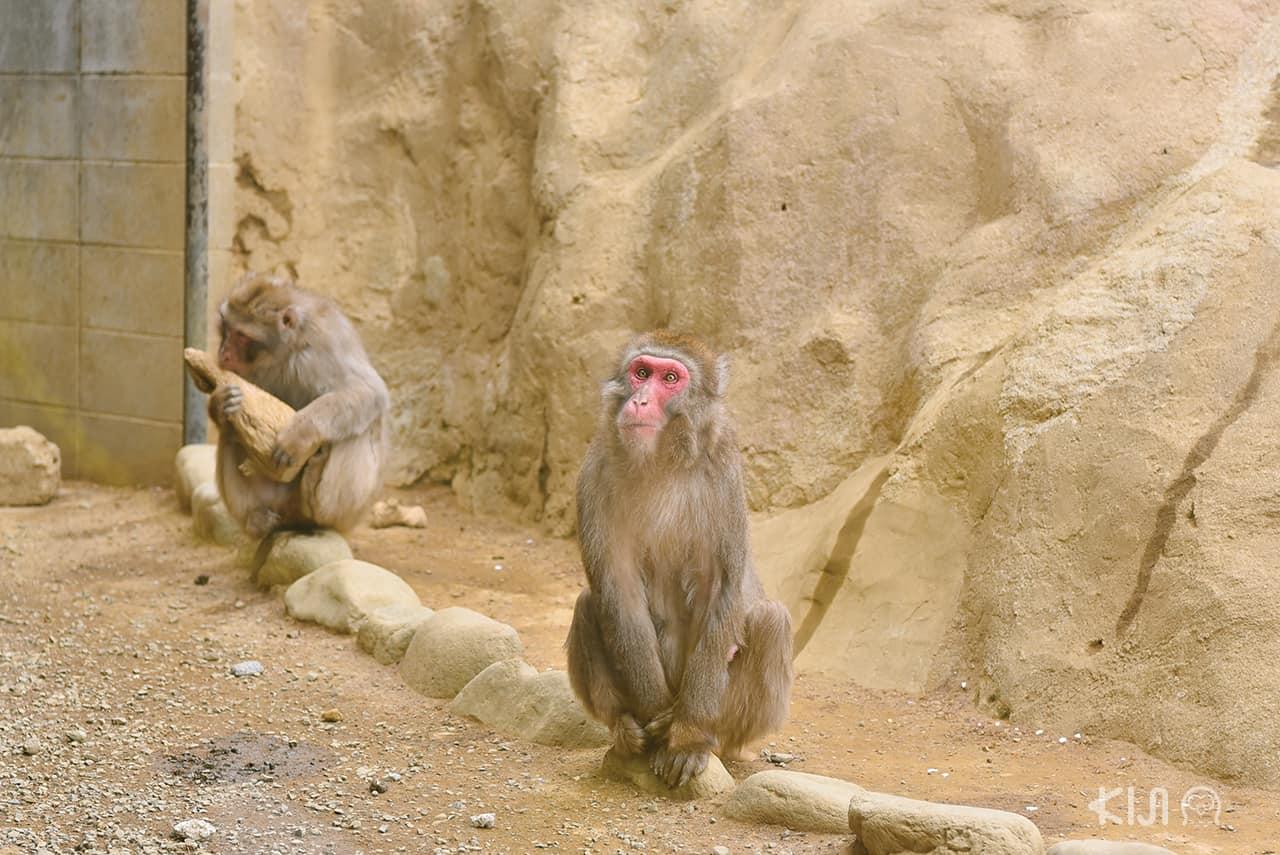 Mt. Takao Monkey Park