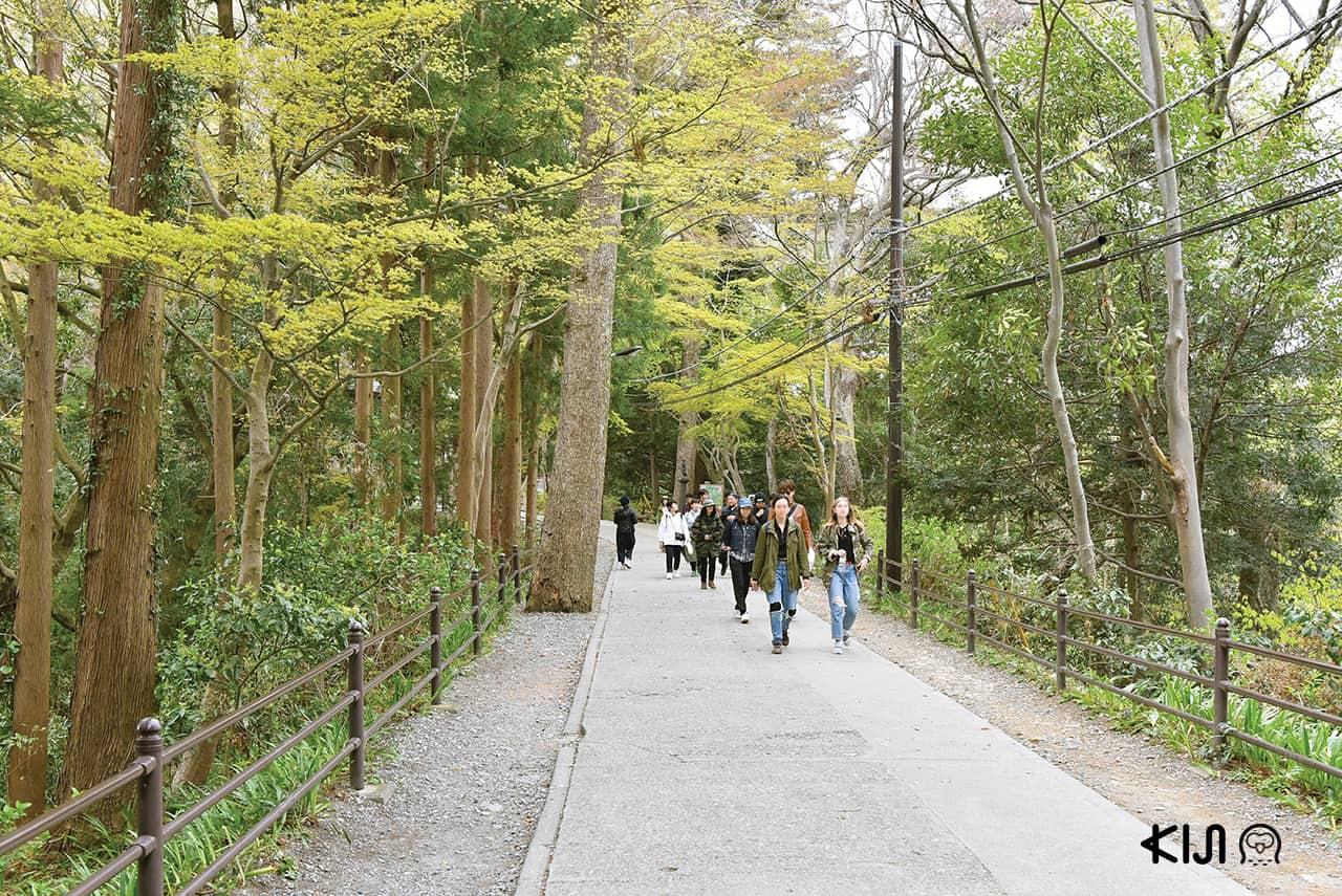เที่ยวภูเขาทาคาโอะ (Mt.Takao) โตเกียว