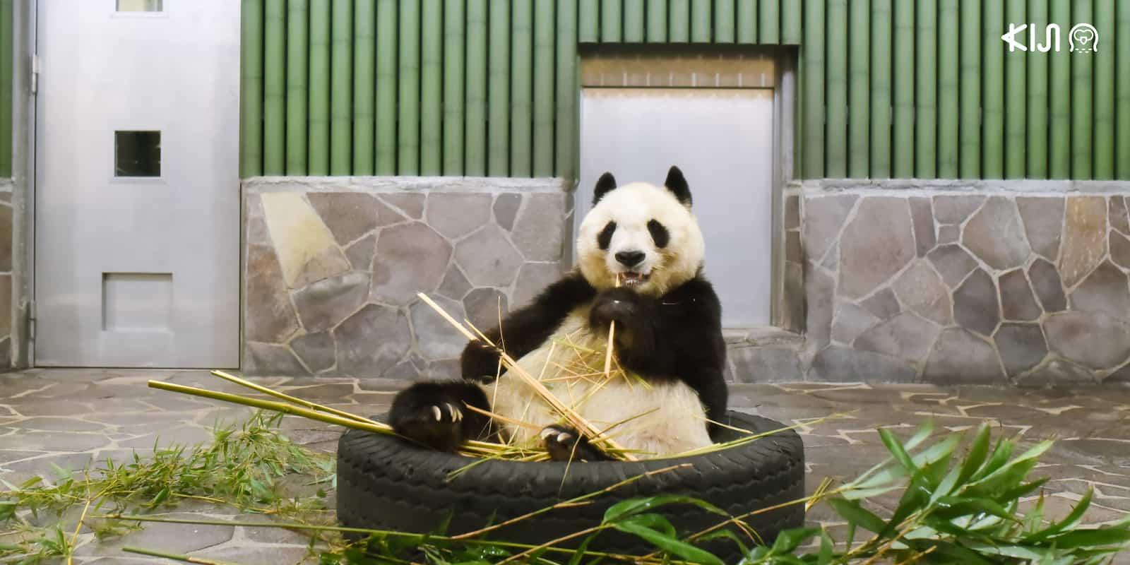 สวนสัตว์โกเบโอจิ (Kobe Oji Zoo)