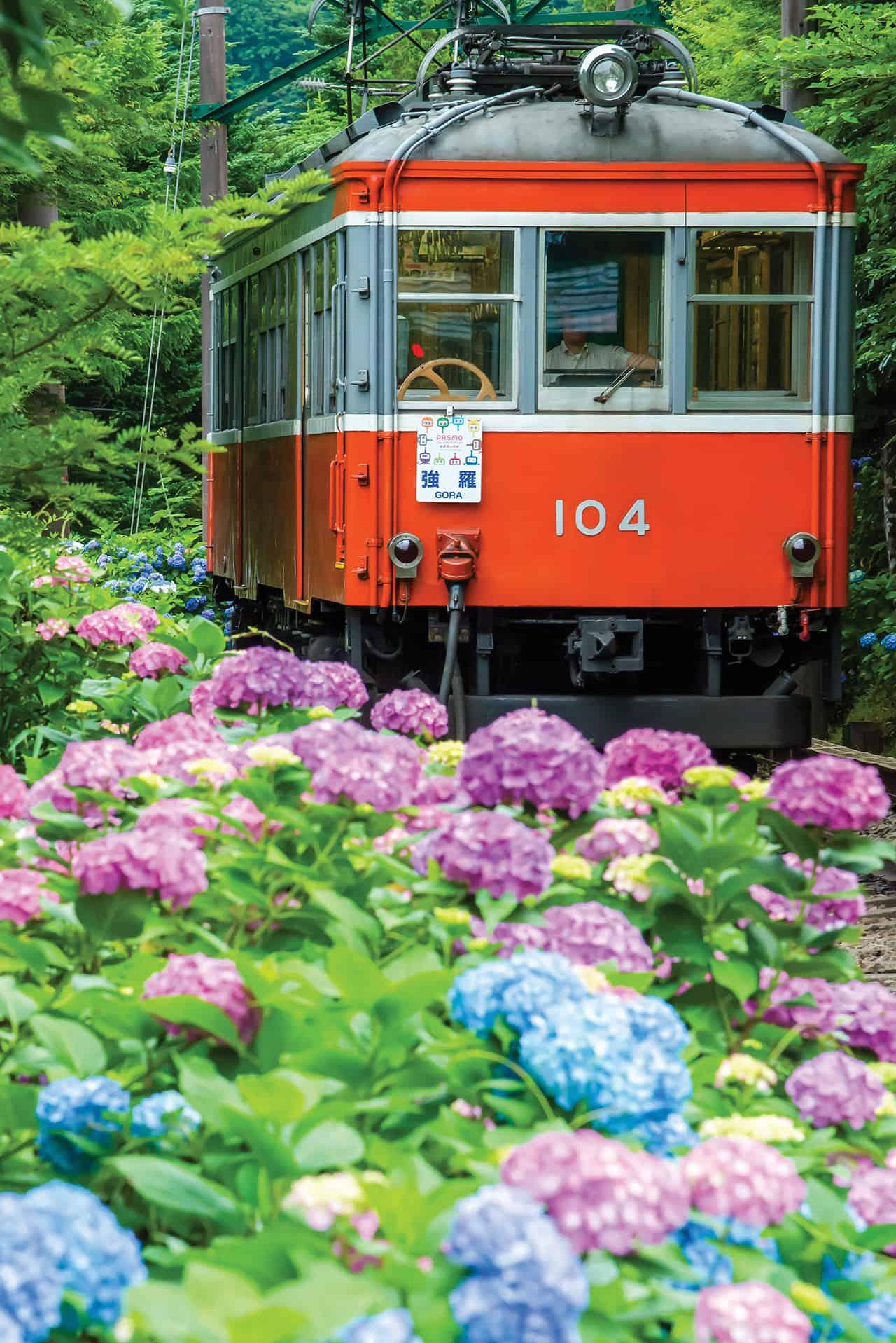 Hakone Free Pass - Hydrangea Train